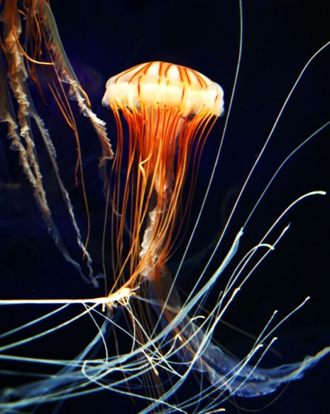 PERC Photography School Jellyfish - Black