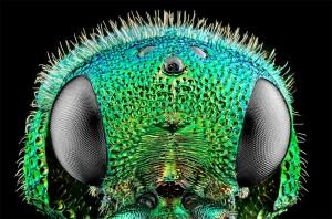 extreme-macro-wasp